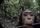 Meraklı maymun :)