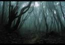 NightShade - Sanctum
