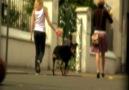 Sokağa Çöp Atmak Mı Bu Videodan Sonra TÖVBE :)) [HQ]