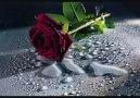 su ve çiçeğin aşkı...