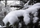 Tombe la neige SALVATORE_ADAMO