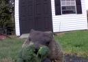 Animal Lovers - See kids I LOVE broccoli... Make sure you chew it well