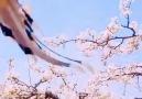 Belgesel Doğa - Afet bizi allahım cenetin kokusu