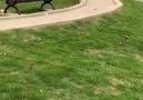 Örgü Dünyası - İnanılmaz Akıllı Köpek Çok Akıllı Köpekler