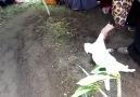 Sahibi ölünce!!! - PETsCafe Animals Hayvan Hakları