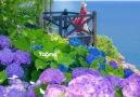 Yağmur Damlası - Güneşler doğsun yüreğinde bugünÇiçekler...